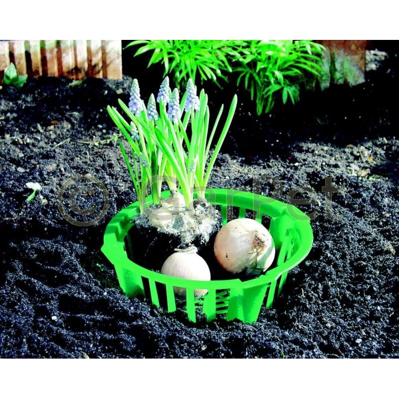 pflanzschalen f r blumenzwiebel pflanzkorb tulpen. Black Bedroom Furniture Sets. Home Design Ideas