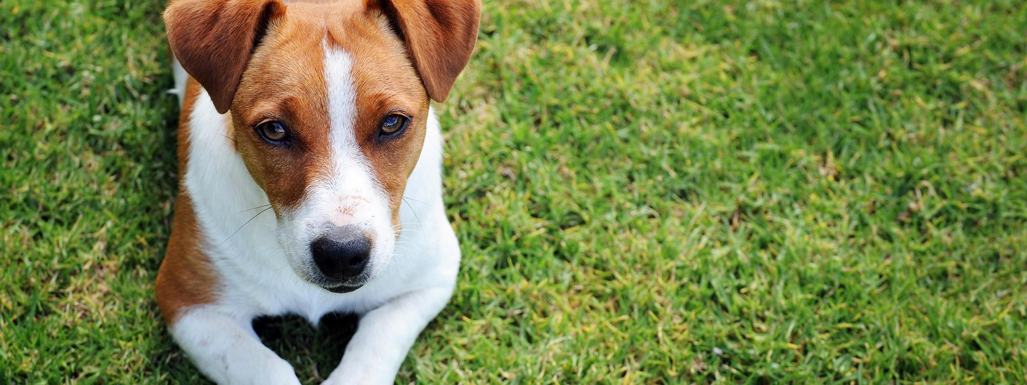 Hundefutter g�nstig