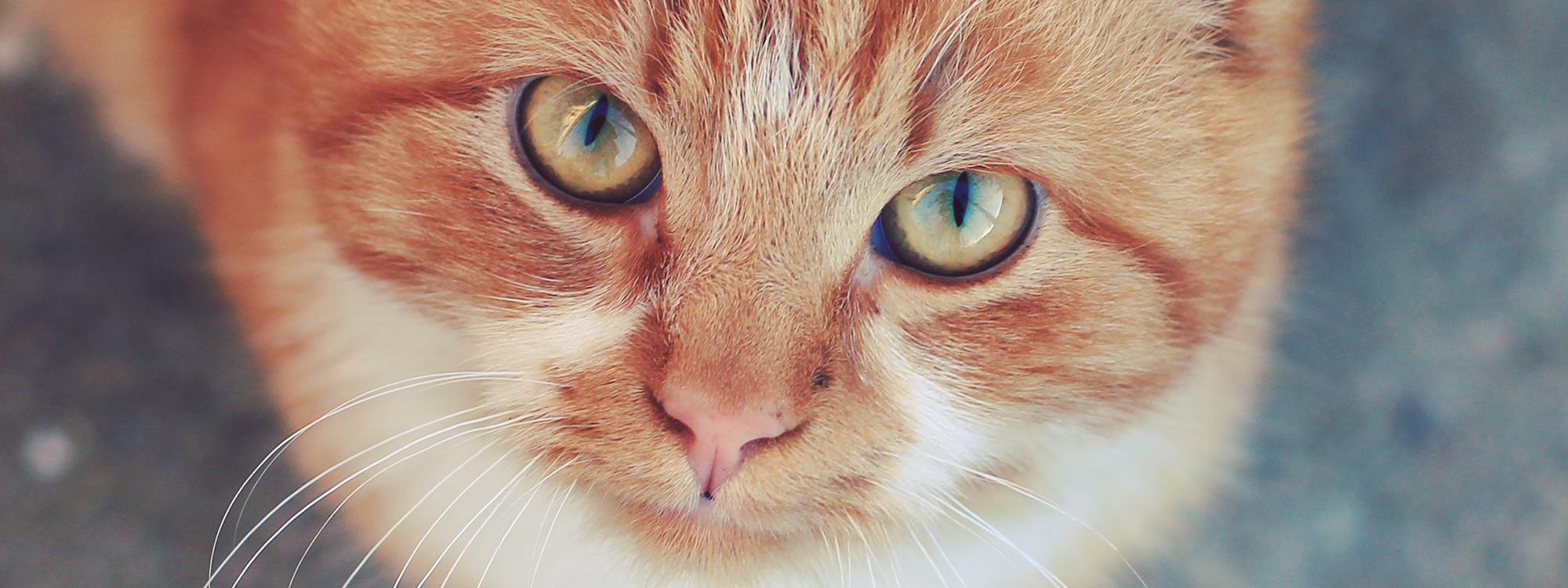 Katzenspielzeug g�nstig