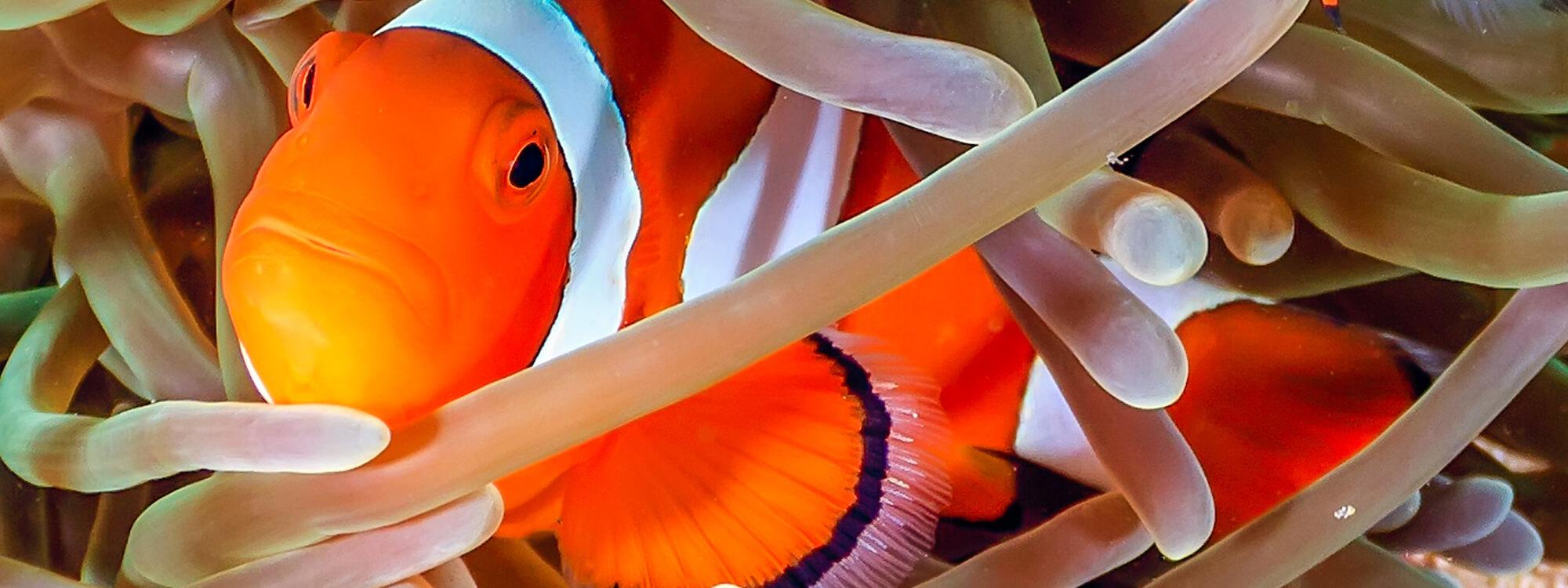 Aquarium günstig