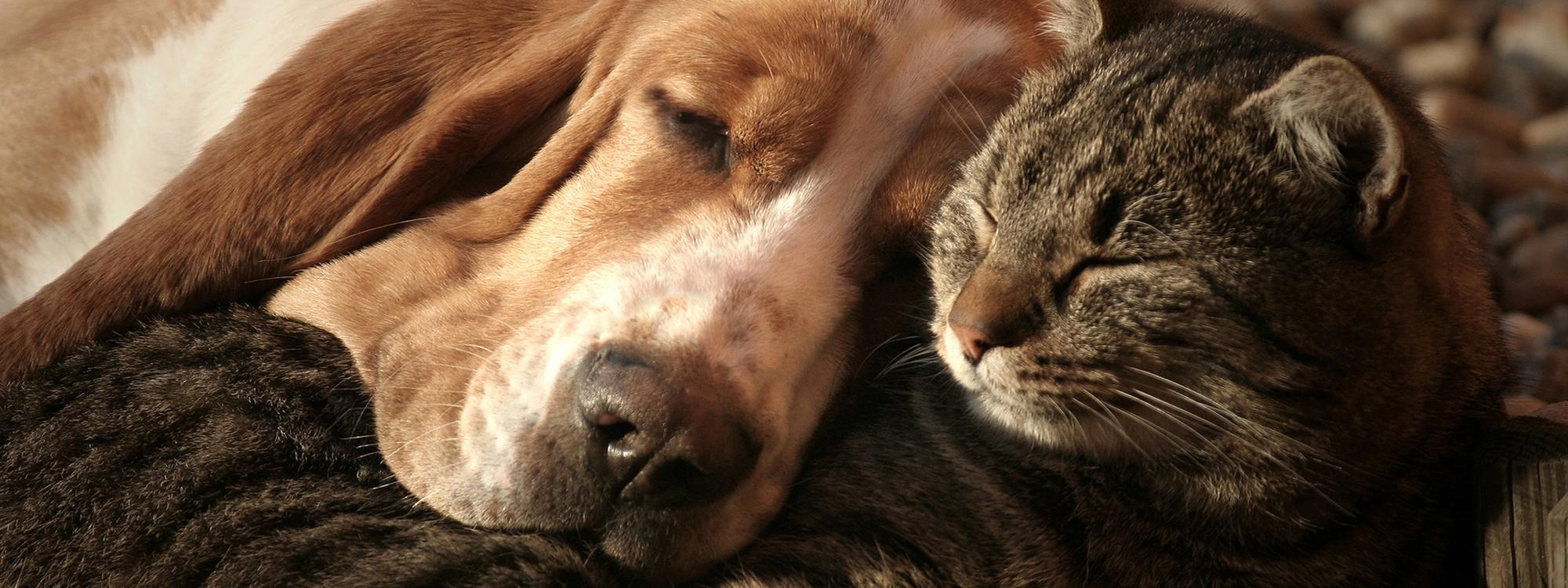 Hunde Katzen Shop